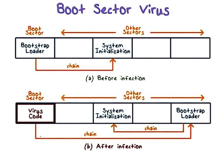 14 различных типов компьютерных вирусов